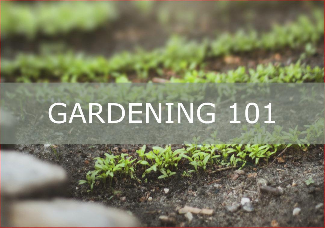 image introducing Gardening 101 blog post